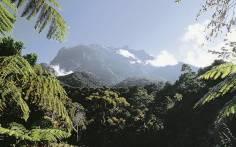 wildlife-of-borneo-21745311-1384274032-ImageGalleryLightbox
