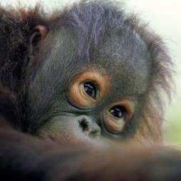 wildlife-of-borneo-21745317-1384274032-ImageGalleryLightbox