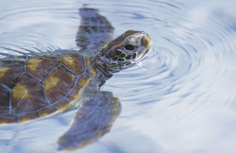 wildlife-of-borneo-31969345-1384274032-ImageGalleryLightbox